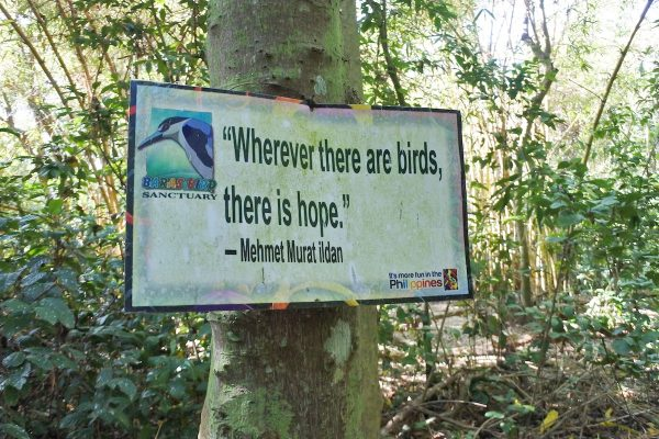 Bird related Quotes