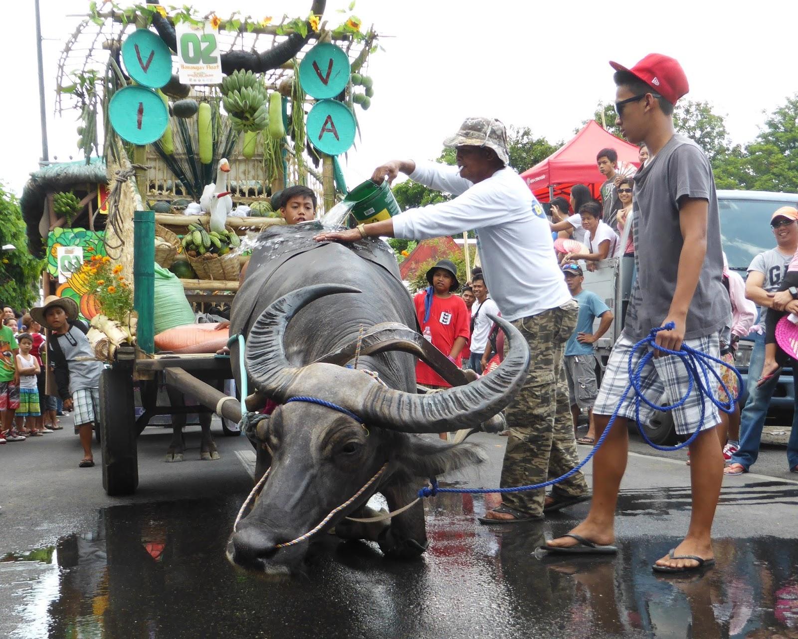 Rizal Carabao Festival