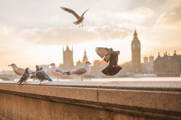 Emirates Flights to Europe Promo
