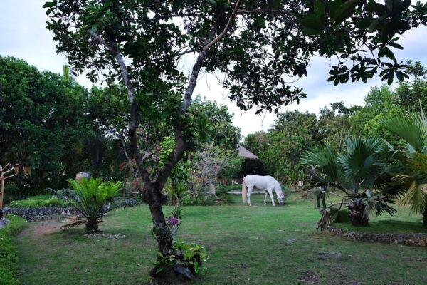 Horseback riding in Bohol