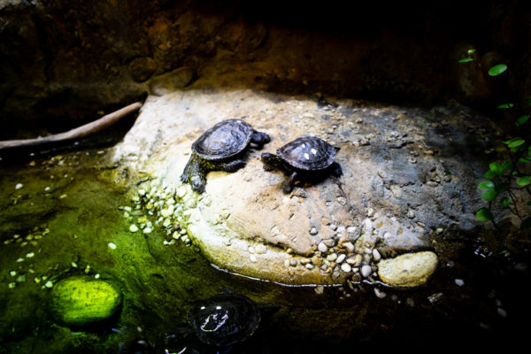 sea life hannover turtle