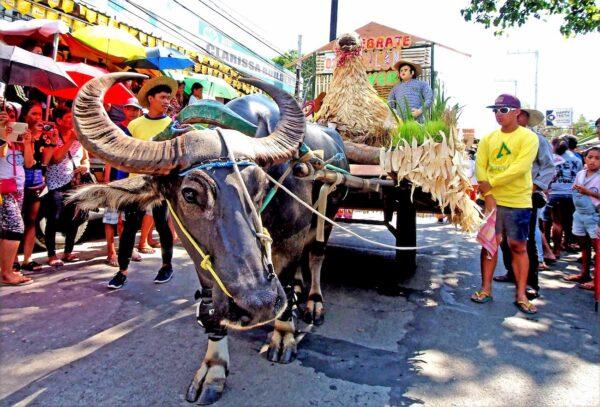 Kneeling Carabao Festival 2018 Parade