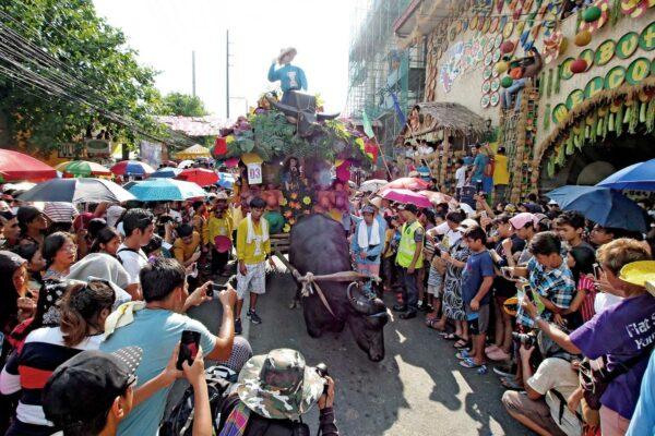 Kneeling Carabao in front of festivalgoers