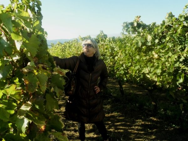 Author in the Barbare Vineyard