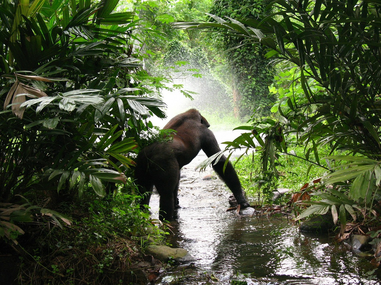 Practical Tips For A Successful Mountain Gorilla Trekking Experience