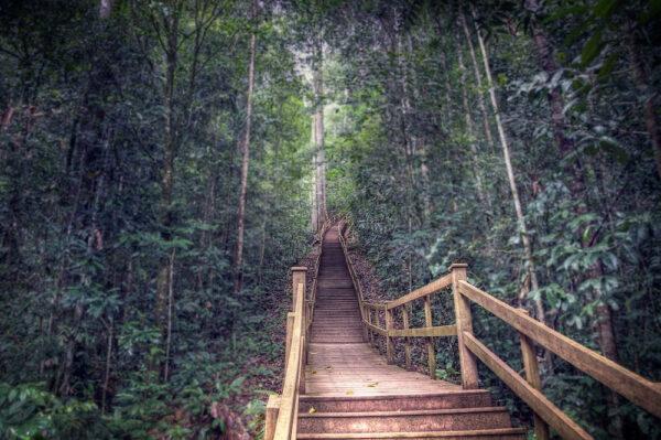Ulu Temburong National Park by Stefano Ferro via Flickr CC