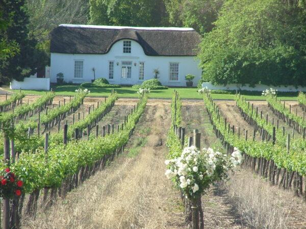 Cape Winelands photo via Wikipedia CC