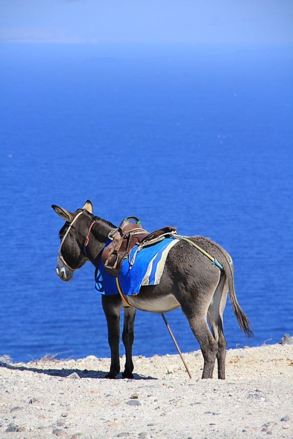 Donkey Ride in Santorini