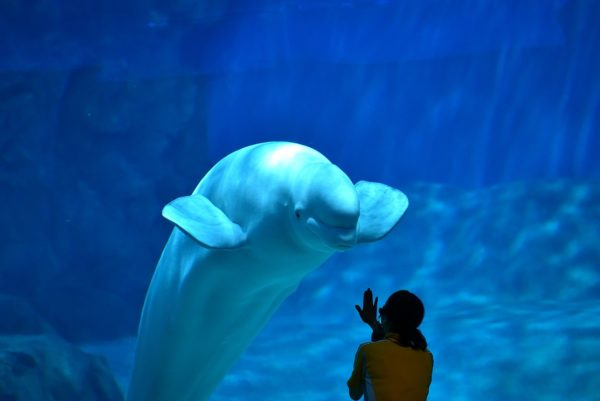 Port of Nagoya and Aquarium by Bariston via Wikipedia CC