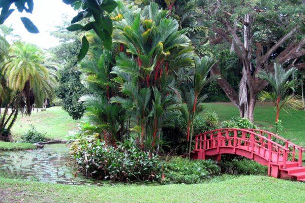 San Juan Botanical Garden by Runneralan via Wikipedia CC