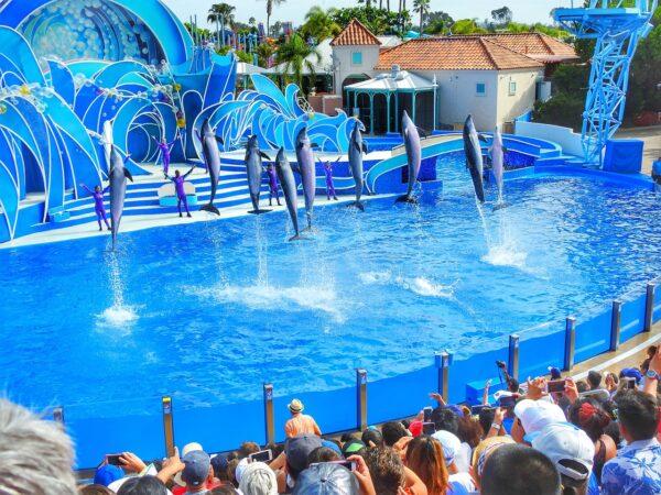 Sea World in San Diego CA