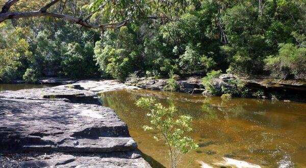 Garigal National Park photo by Travelstine via Wikipedia CC