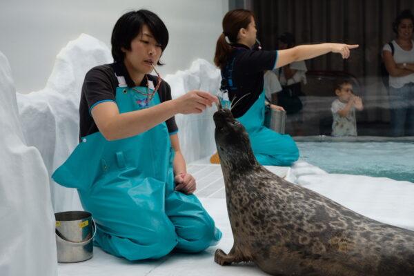 Sea Lion in Osaka