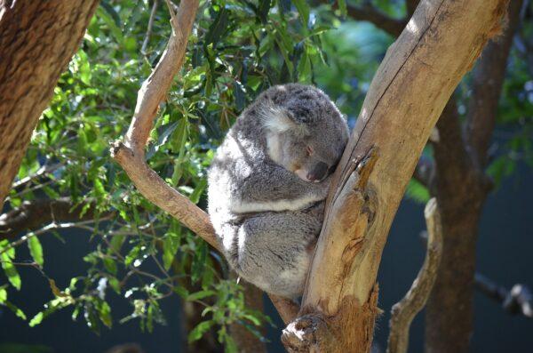 Taronga Zoo in Sydney