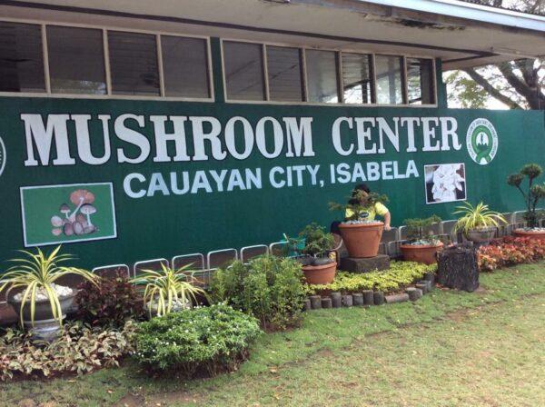Mushroom Center in Cauayan City