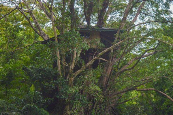 Tree House in Lake Balanan, Negros Oriental photo via FB Page