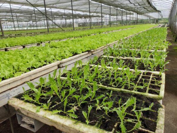 AirAsia Supports organic farming in Tagaytay