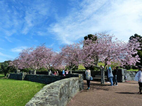 Cherry Blossom Japan 2019 Forecast