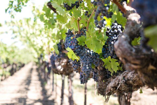 Quinta do Frances Winery