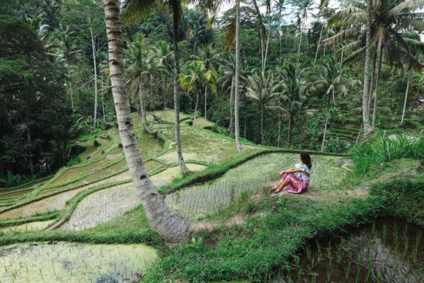 Tegalalang Rice Terraces by Sam Beasley via Unsplash