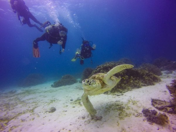 A turtle of Balicasag Island (not part of tour) - Gabrielle M