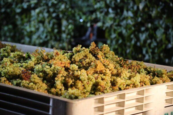 TN Valley Winery