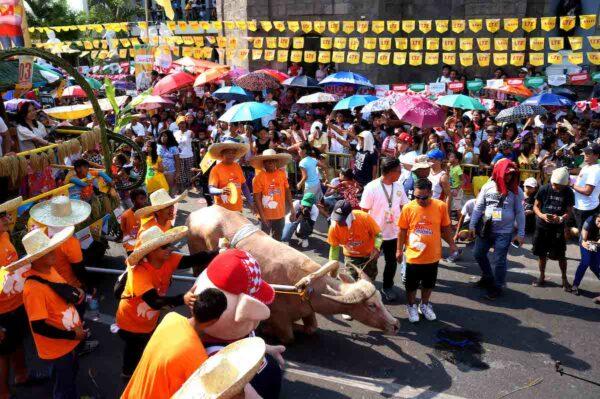 Kneeling Carabao Festival in Pulilan Bulacan