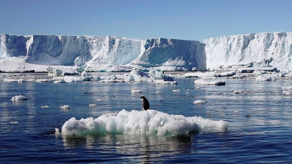 The impact of climate change on the Antarctic