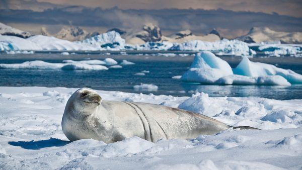 The impact of climate change on the Antartic