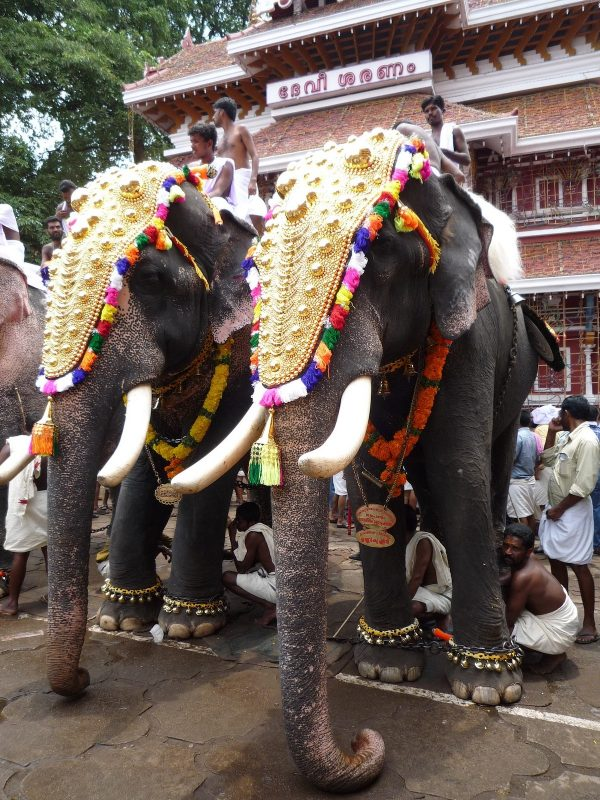 Elephant Temple Festival in Thrissur