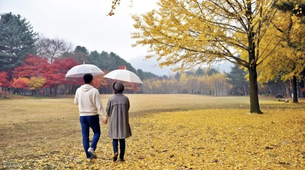 Nami Island Day Trip Tour Packages photo via KLOOK