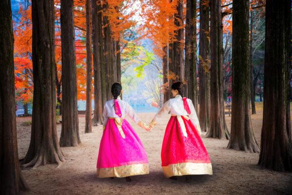 Travel Guide to Nami Island, South Korea