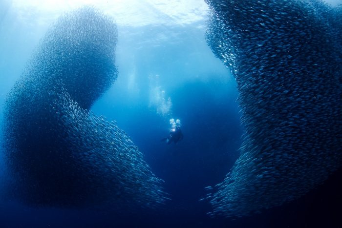 In the midde of Sardines by Jerome Kim