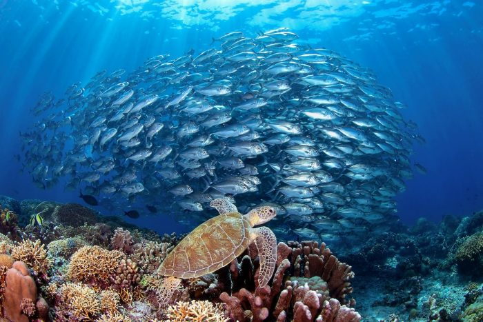 Tubbataha Reefs photo by Jerome Kim