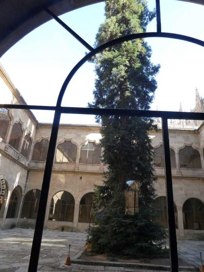A redwood grows in the library courtyard