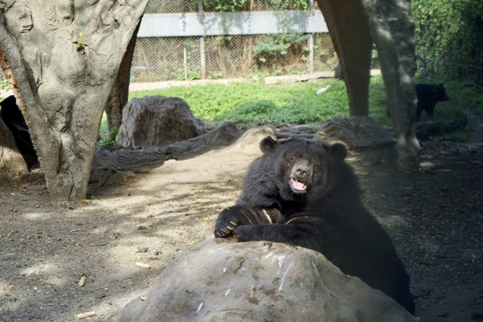 Adorable Bears in Bangkok