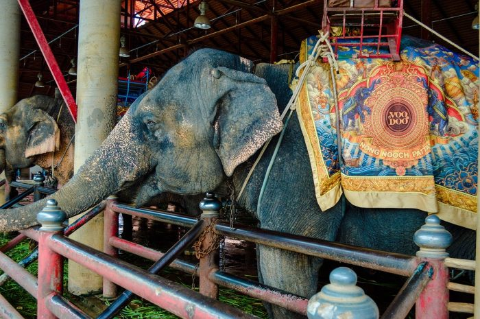 Cambodia announced it would ban the rides at Angkor Wat