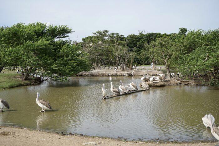 birds bangkok safari world Birds In Safari World Zoo In Bangkok