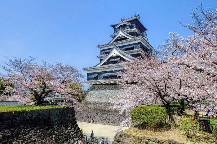 Cherry Blossoms Season in Kumamoto