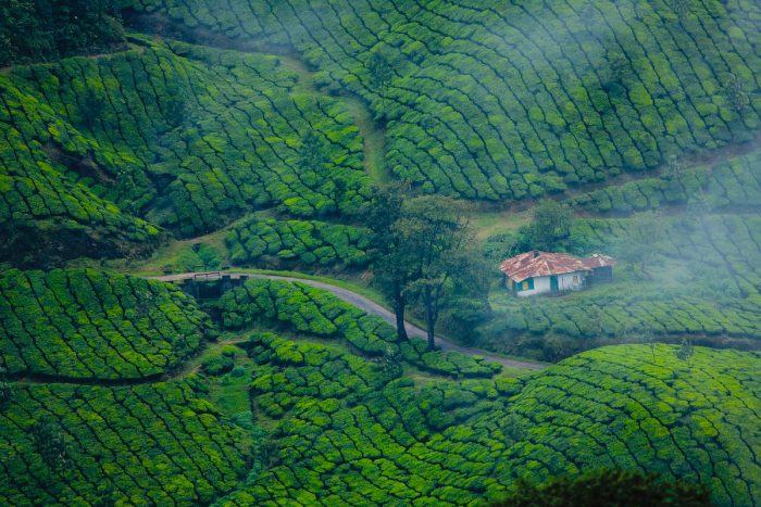 Munnar Kerala Tea Plantations