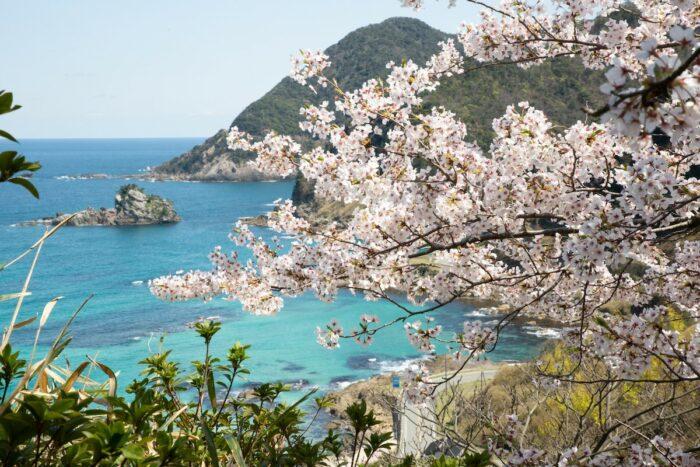 Takeno Beach with Sakura