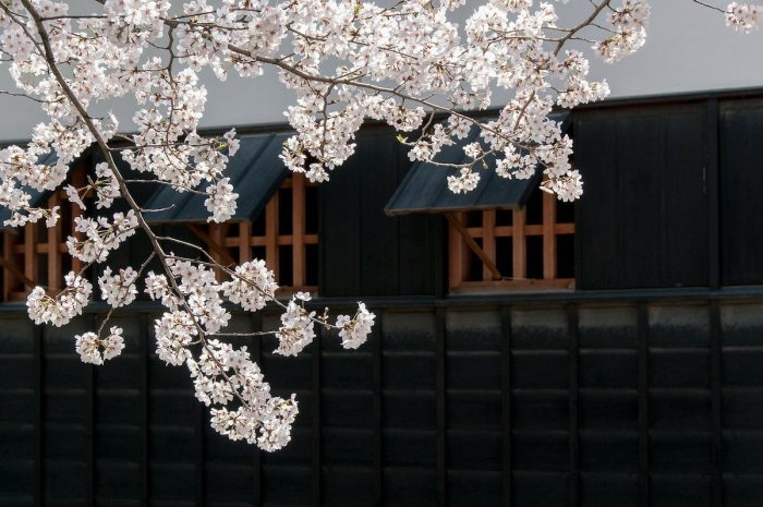 Best Things to do in Kumamoto, Japan