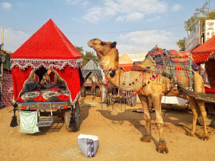Chancing upon a Baraat procession in Pushkar