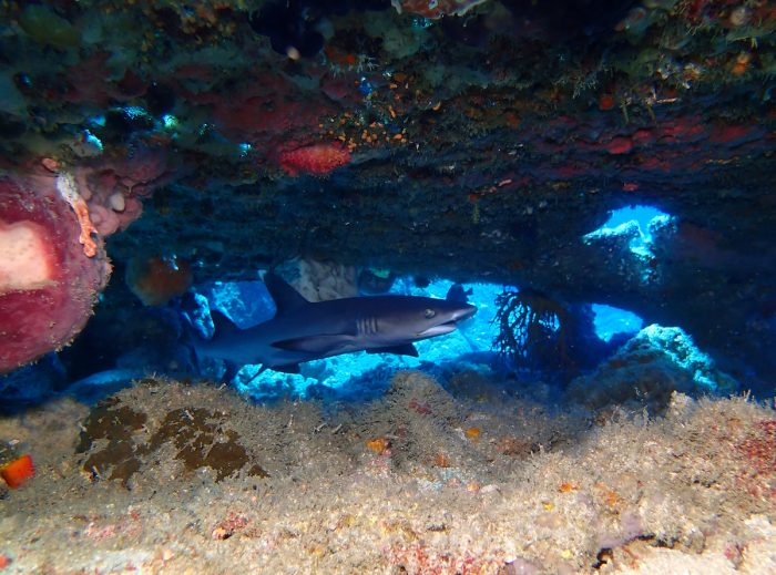 Underwater photo contest third prize (wide angle) by Paul Partridge