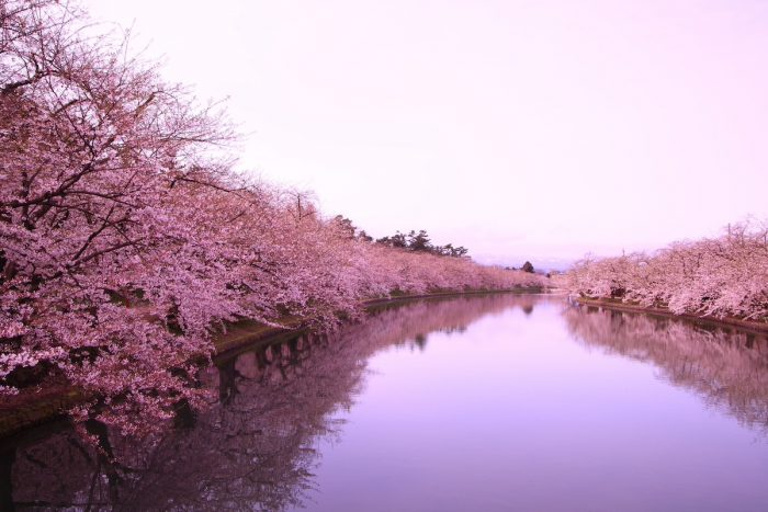 Home.fit Moat-and-Cherry-Blossoms-in-Hirosaki-photo-via-Depositphotos-700x467 Things to Do and See in Hirosaki Castle and Park in Aomori, Japan