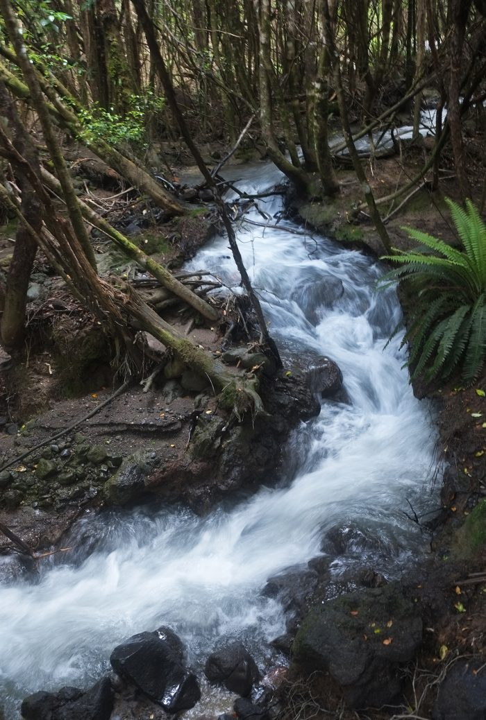 A fast stream flowed parallel to many parts of the way offering a welcome sound to the silence in the forest.