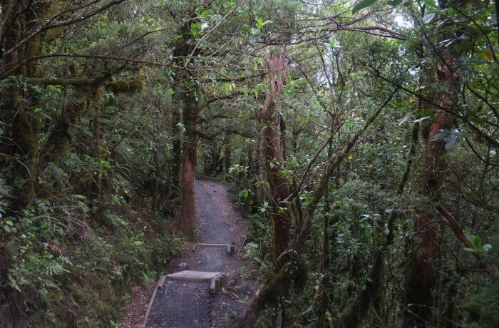 Entering the Ketetahi forest.