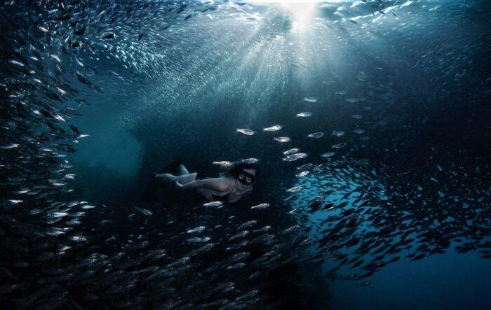 Freediving with the sardine run by Bo Mancao