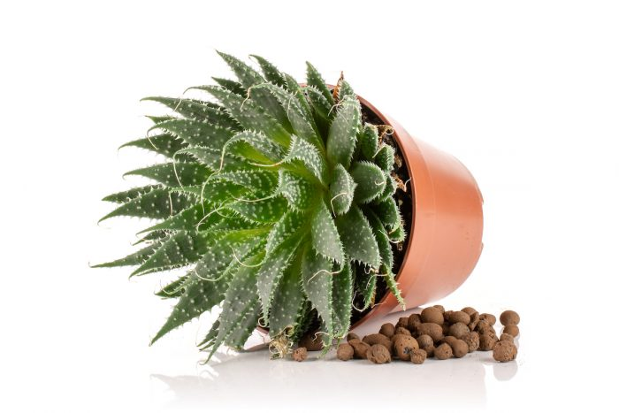 Passive Hydroponic System for indoor plants