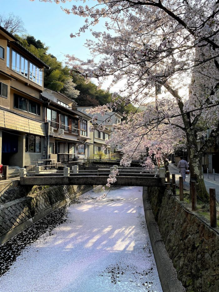 Cherry Blossoms in Kinosaki Onsen